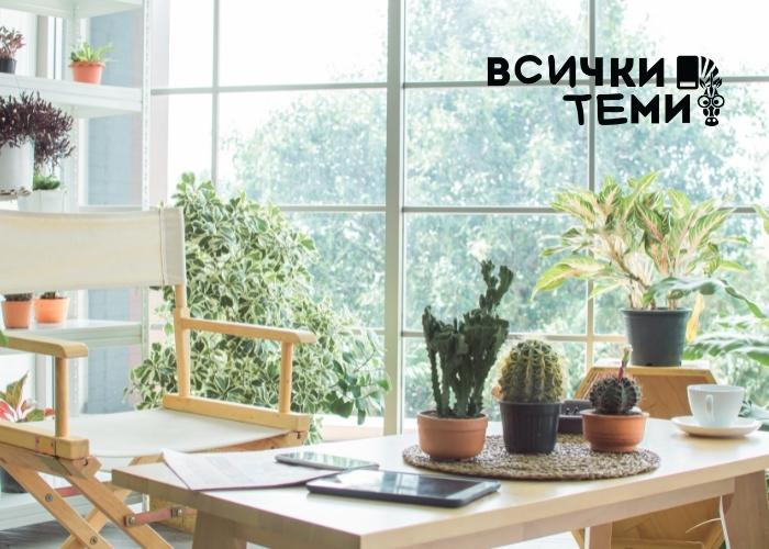 Най-лесните за отглеждане стайни растения