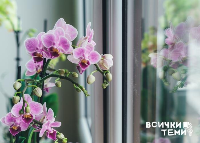Отглеждане на орхидея – какво трябва да знаем