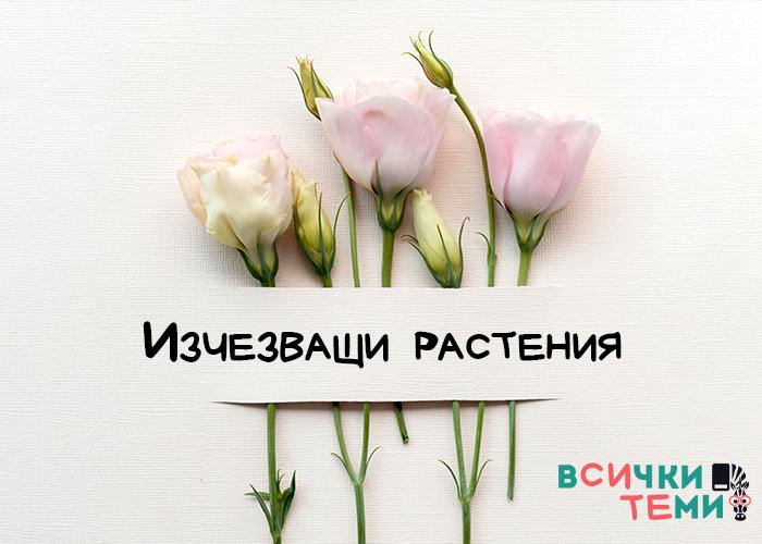 8 растения, които изчезват от ширините на България заради човека