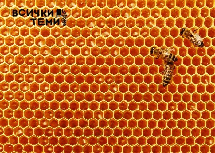 Лечебните свойства на меда