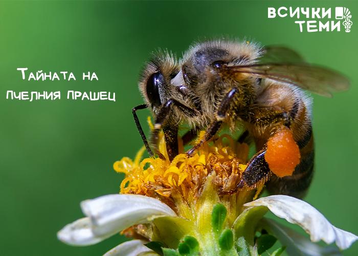 Тайните на пчелния прашец